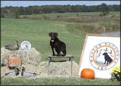 Hope at 2012 AKC Master National